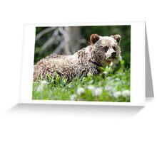 Grizzly Bear Cub  Greeting Card