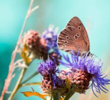 Beautiful brown butterfly sitting on a flower. Colorful turquoise background Sticker