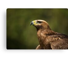 Close-up of sunlit golden eagle looking up Canvas Print