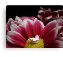Flower Nest Canvas Print