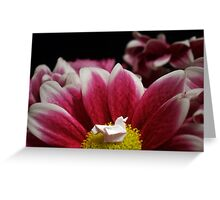 Flower Nest Greeting Card