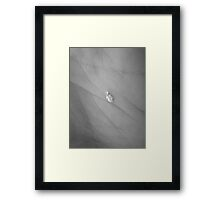 Penguin in a Snow Storm Framed Print