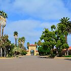 Stanford University summer campus, California, USA. Blue sky, palm trees  by naturematters