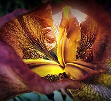 Heart Of Gold by naturelover