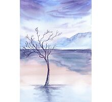 winter background Photographic Print