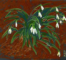 Snowdrop flowers by kira-culufin