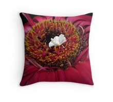 Little White Peacock in a Field of Colour Throw Pillow