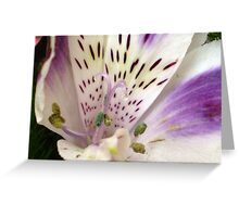 Crystal Dew Greeting Card