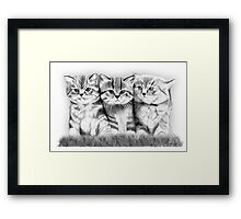 Pussy Cats Framed Print