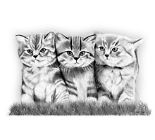 Pussy Cats Photographic Print