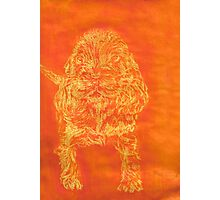 """Orange Puppy"" (monochromatic hue series) Photographic Print"
