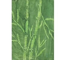 """Green Bamboo"" (monochromatic hue series) Photographic Print"