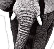 African Elephant 2 Sticker