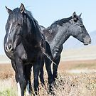 Stallion and Son by Kelly Jay