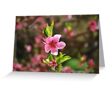 Tree pink flower Greeting Card