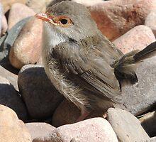 Backyard Birdie by ScenerybyDesign