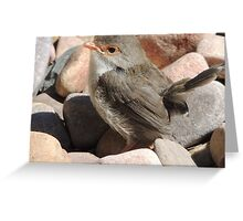 Backyard Birdie Greeting Card