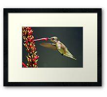 Sweet Nectar!! Framed Print