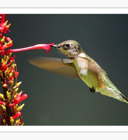 Sweet Nectar!! Sticker