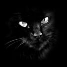 Black Cats Rule by GritFX