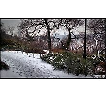 Romp Through Fort Tryon Park Photographic Print