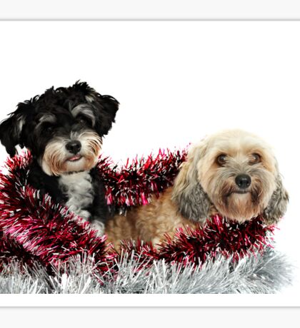 Christmas Pooches Sticker