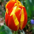 Sunrise Flower by Penny Smith