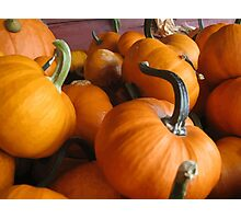 Vector Style Harvest Of Pumpkins Photographic Print