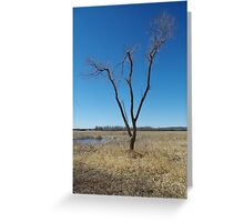 tree in a field  Greeting Card