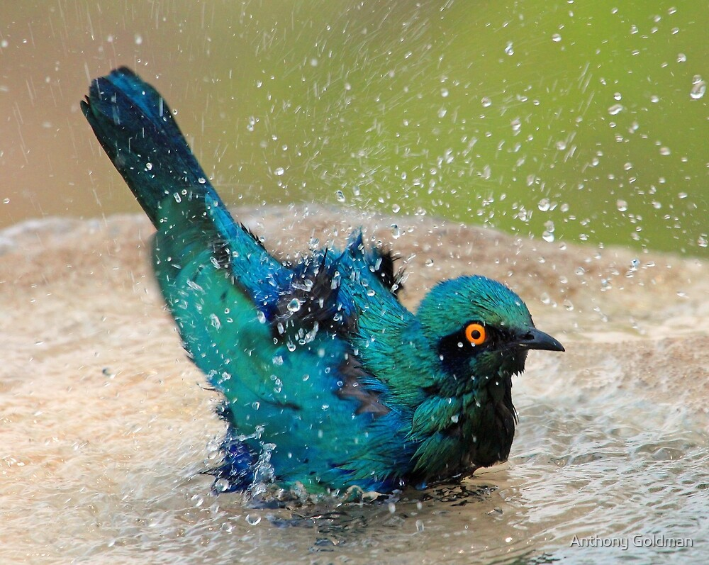 It is such fun taking a bath! by jozi1