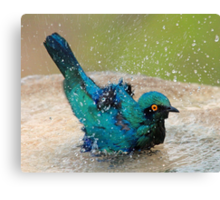 It is such fun taking a bath! Canvas Print