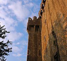 Blarney Castle Wall by Eileen McVey