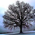 January Tree by vigor