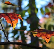 Autumn Leaves by Gilda Axelrod