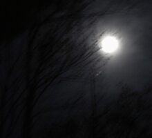 Forest Moon by Gilda Axelrod