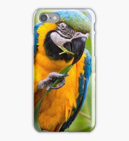 Macaw 2 iPhone Case/Skin