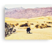 At Death Valley national park, USA in summer Canvas Print