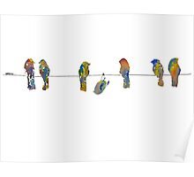Colorful birds on a wire original design Poster