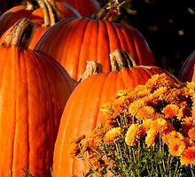 Orange You Glad Its Autumn? by WildThingPhotos