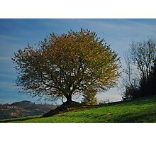 Autumn tree Photographic Print