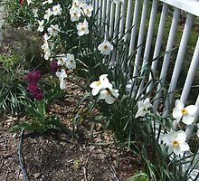 Spring Narcissus by Maureen Zaharie