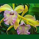 Orchids by John Butler