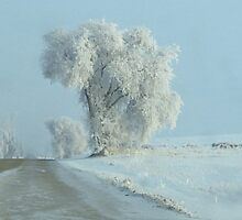 Winter Across The Intersection...On Freezeout Rd. !!!...One Basic Color. Monotone Beauty Challenge Winner ! by trueblvr