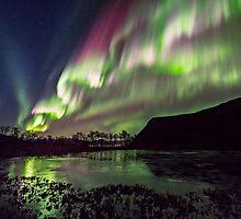 Rapid Auroras by Frank Olsen