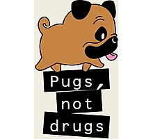 Little Pugs Not Drugs Photographic Print