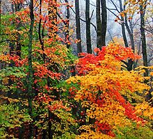 AUTUMN SPLENDOR (HORIZONTAL) by Chuck Wickham
