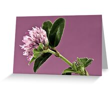 Wild Clover Blossom - Macro  Greeting Card