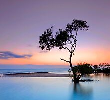 Garry's Tree - Wellington Point Qld Australia by Beth  Wode