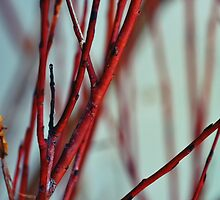 bloody branches by LindaMarieAnson