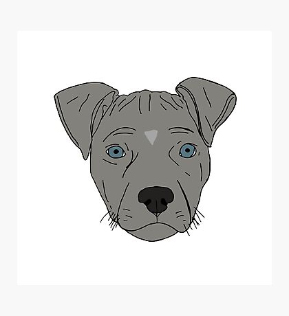 Pit bull Pup Photographic Print